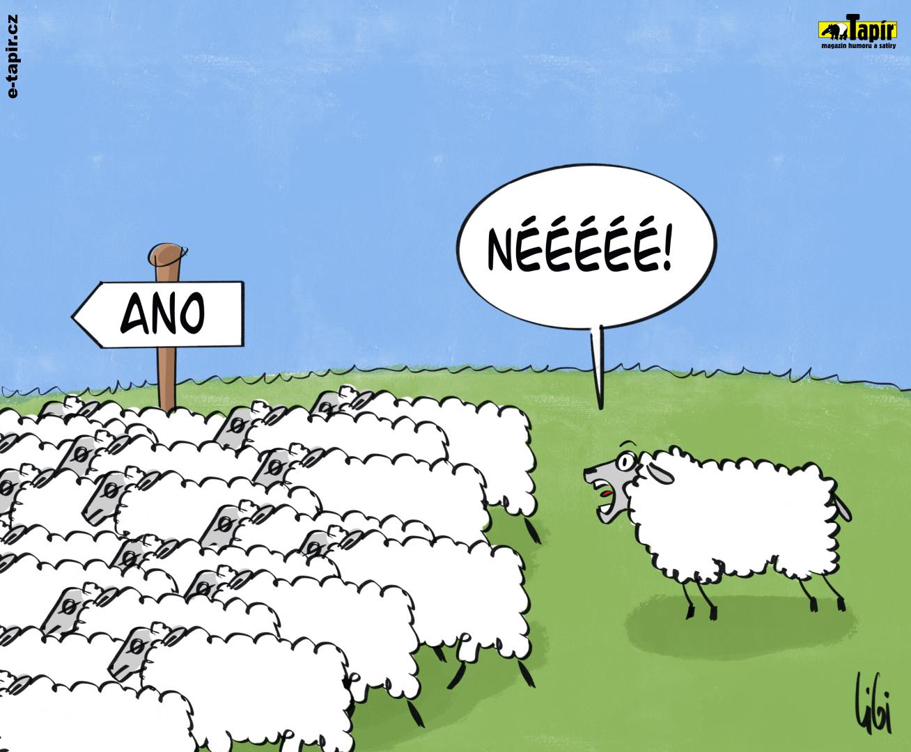 ovce-5df47a6f